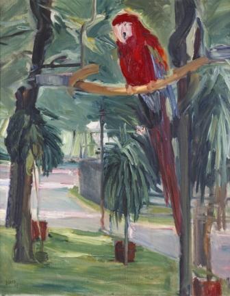 Papoušek, 1907